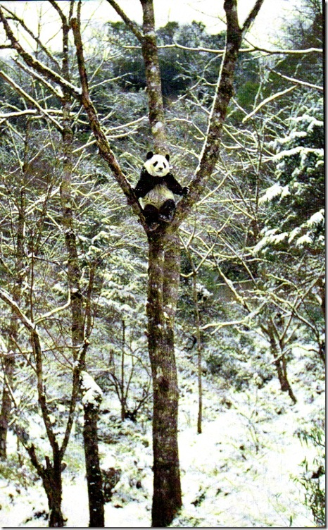 heather-angel-panda001