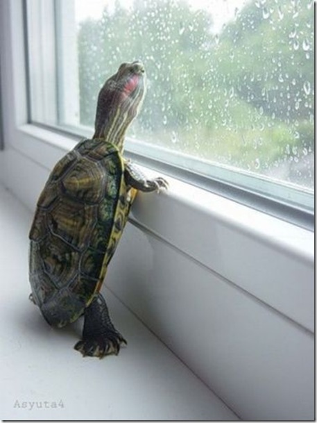 I want to go outside
