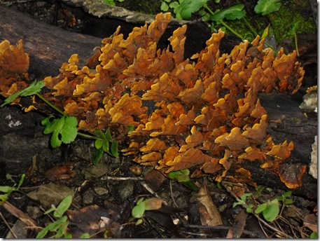 awesome-fungus-1