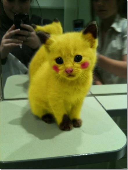 Pikachu-Kitten