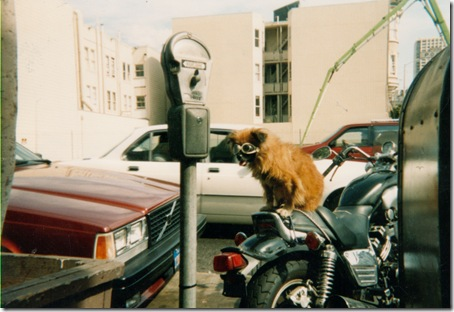 dog on bike, circa 1980