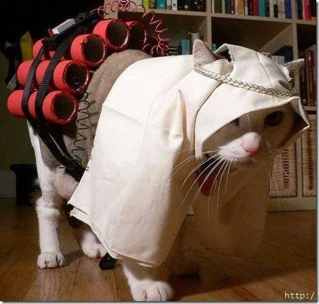 Suicide_bomber_cat