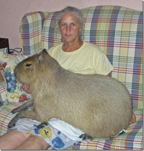 capybara_picdump-147