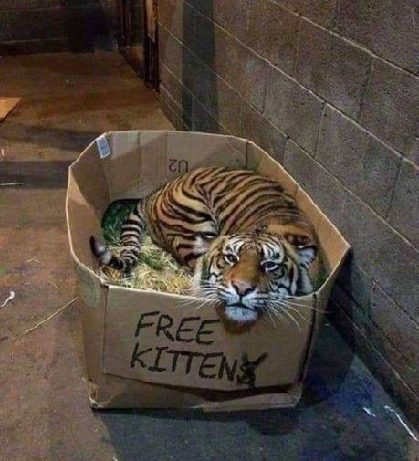 freee-kitten