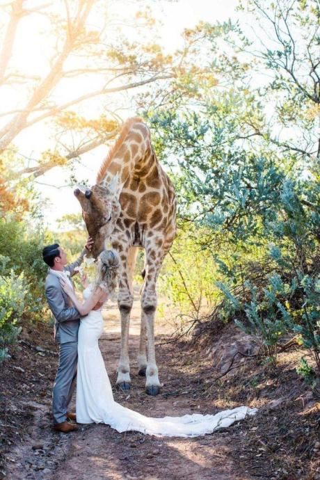 giraffe-officiates-at-wedding.jpg